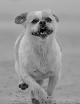 Kaartenset Lieve hond